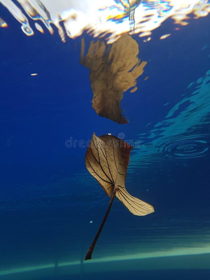 höstleaf under vatten royaltyfria bilder