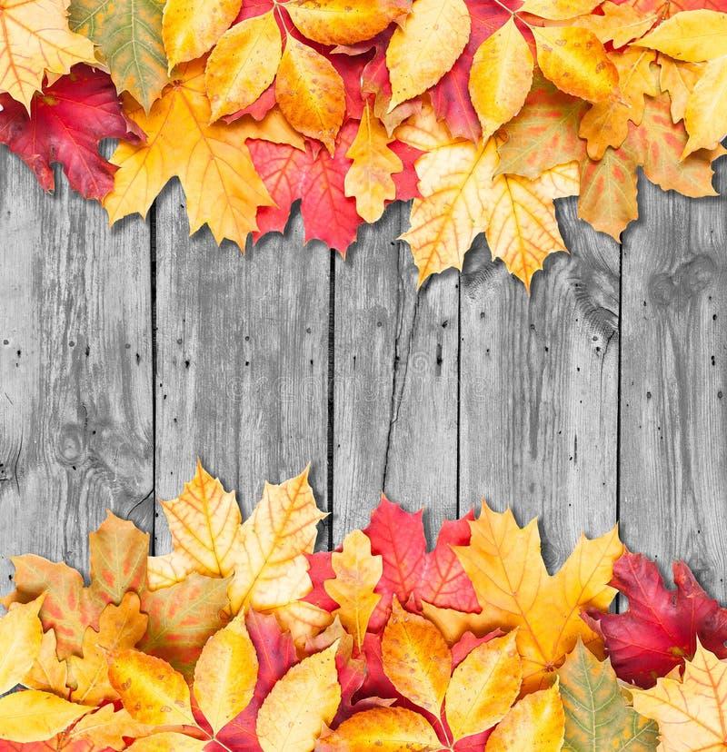 Höstleaves över träbakgrund. Kopiera avstånd. royaltyfria bilder