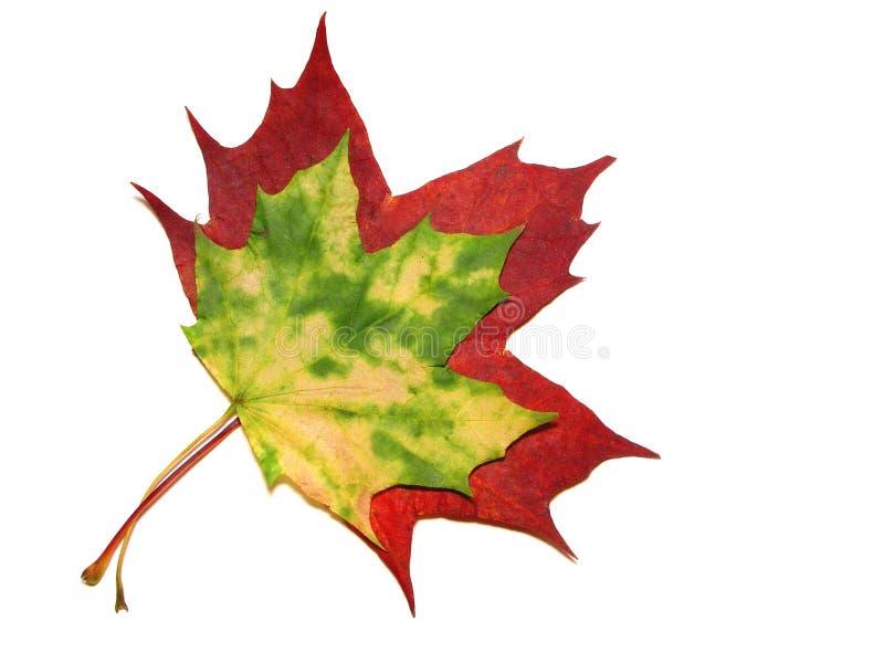 Download Höstleaves arkivfoto. Bild av leaf, naturligt, close, rött - 248506