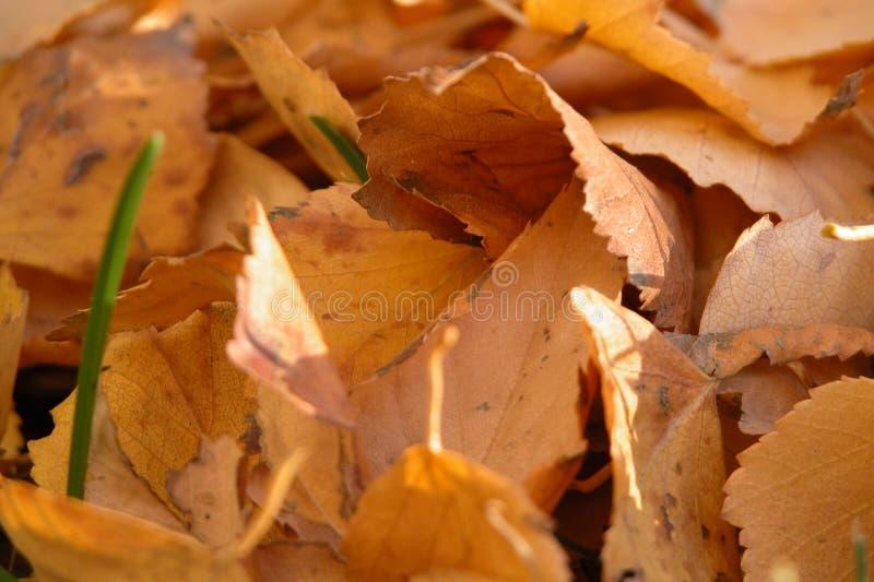 Download Höstleaves fotografering för bildbyråer. Bild av leaf, fall - 25909