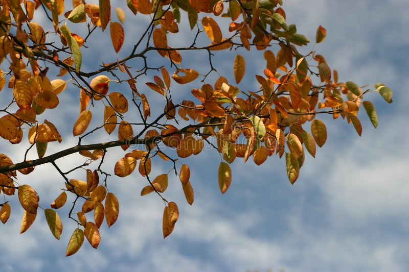 Download Höstleaves arkivfoto. Bild av fall, leaves, leaf, trees - 34802