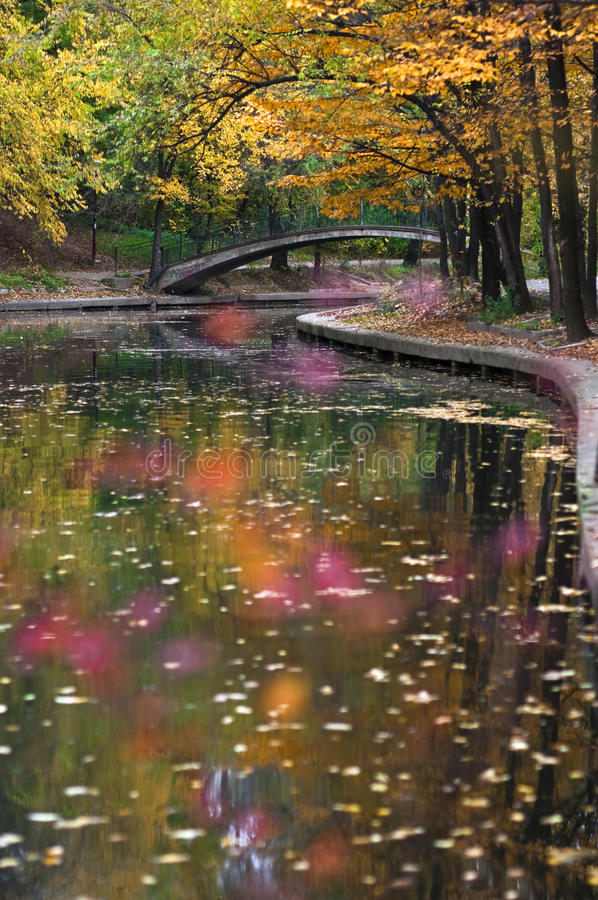 Höstlig parkflod