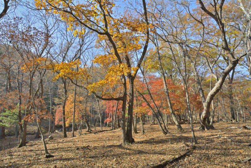 Download Höstlig skog fotografering för bildbyråer. Bild av rött - 78727623