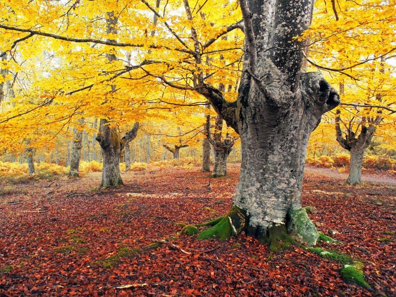 Höstlig skog med livliga färger royaltyfri fotografi