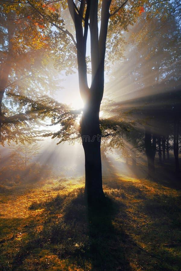 Höstlig skog med solstrålar arkivfoton