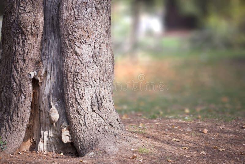Höstlig trädstam arkivbild