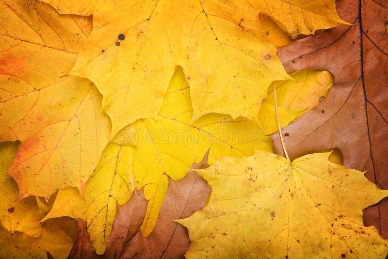 höstliga leaves royaltyfri fotografi