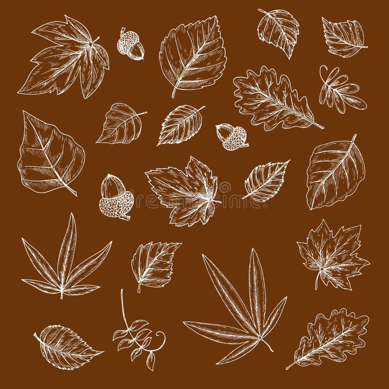 Höstliga stupade sidor och ekollonkrita skissar vektor illustrationer