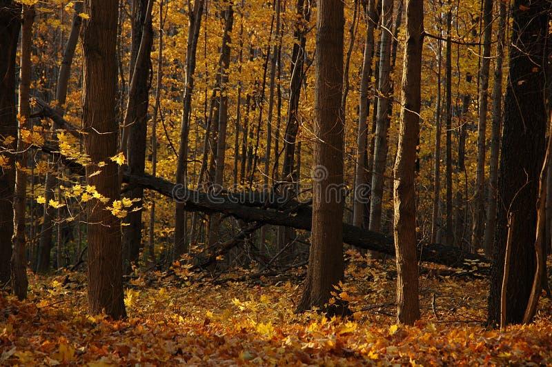 Download Höstliggande arkivfoto. Bild av lövverk, natur, skog, säsong - 504322