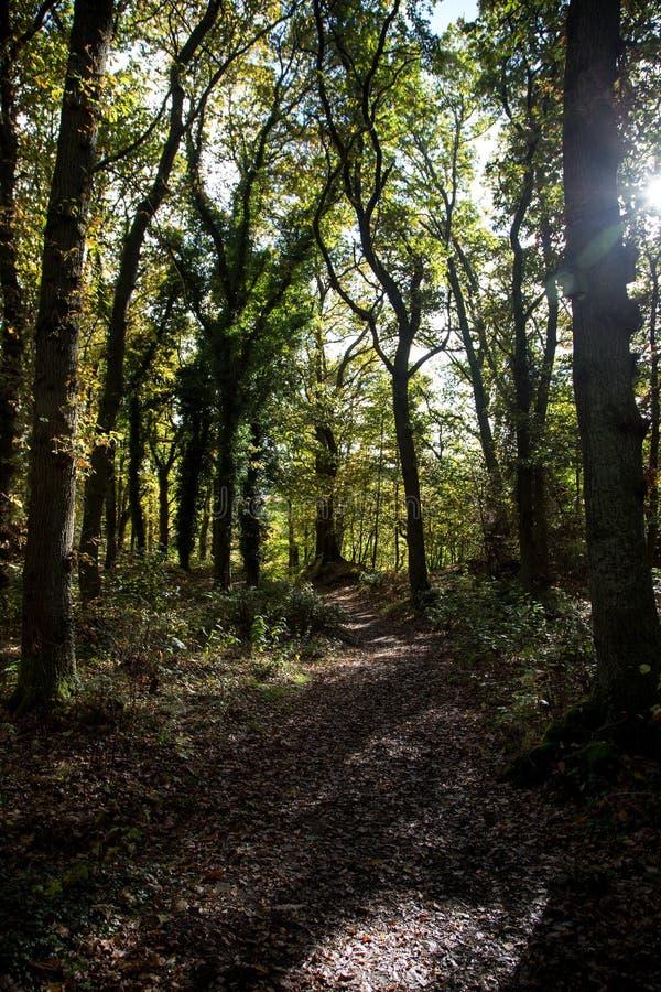 Höstligt morgonsolljus på en Forest Pathway royaltyfria foton