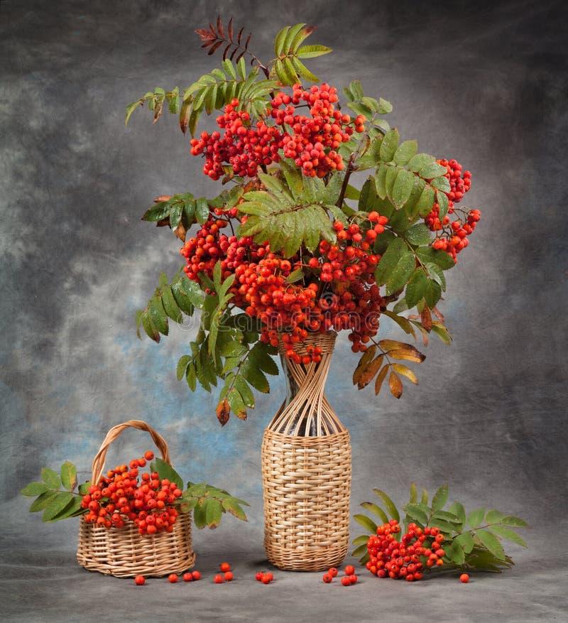 höstlivstid fortfarande Rönnen förgrena sig i en vas och en korg royaltyfri foto