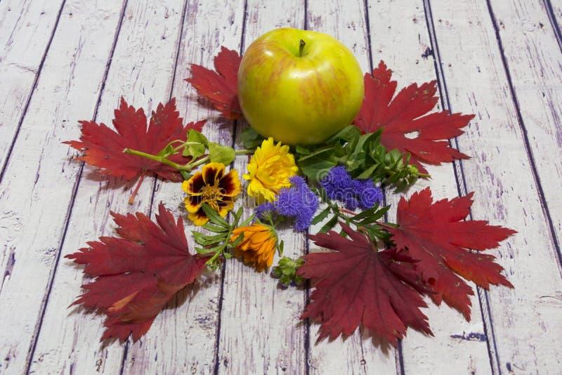 höstlivstid fortfarande trädgård Apple, röda höstlönnlöv och blommor på ljus trädbakgrund royaltyfri bild