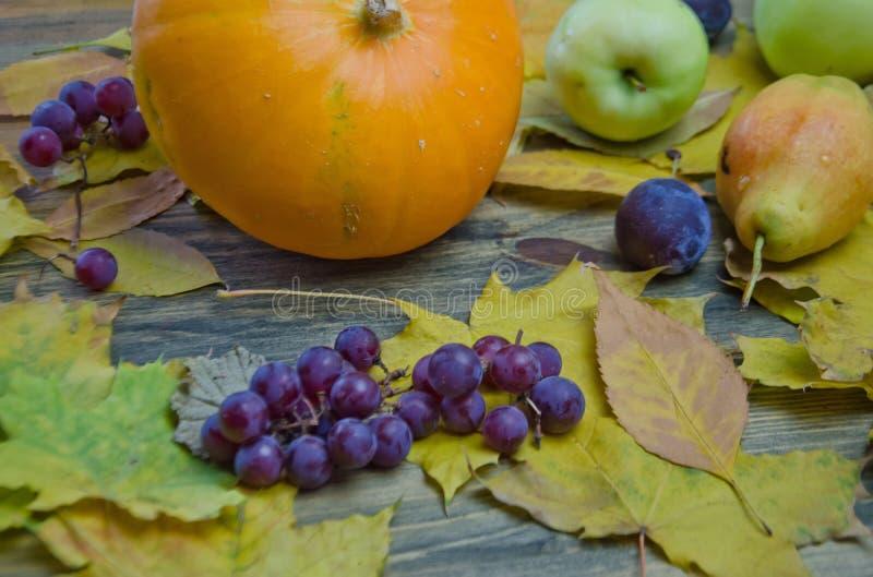 Höstlynne, pumpor och lönnlöv spridda blåa druvaäpplen och päron på träbakgrund royaltyfri fotografi
