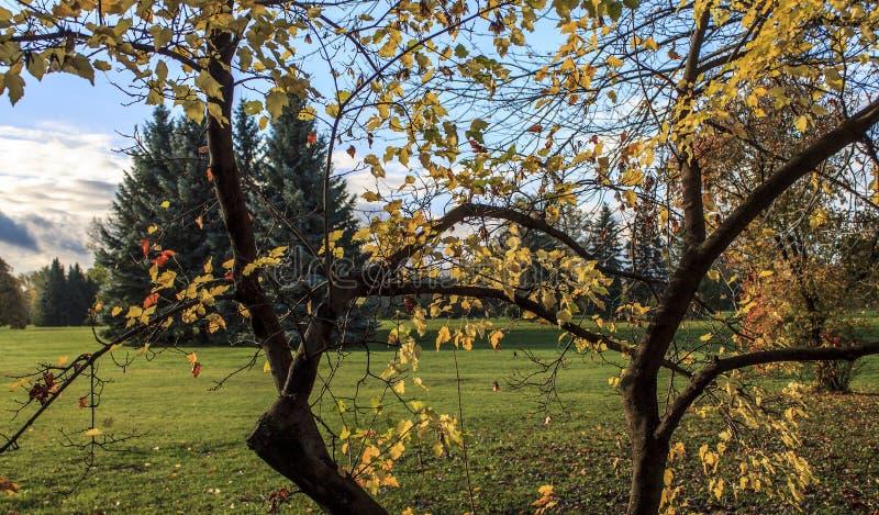 Höstmorgon i parkera royaltyfria foton