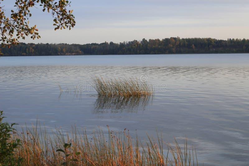 Höstmorgon vid floden arkivfoton