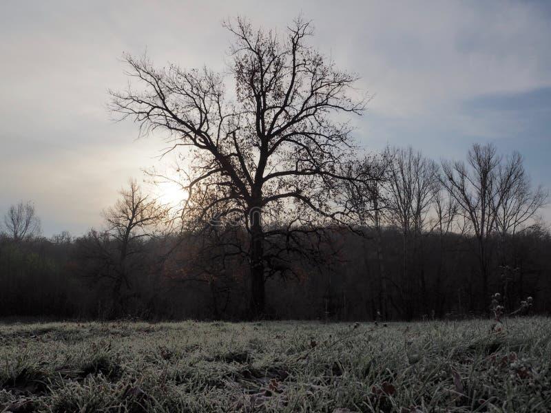 Höstnatur, när den startar att få förkylning fotografering för bildbyråer