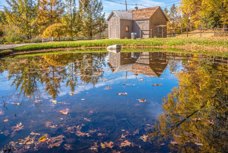 Höstnaturplats med det härliga dammet royaltyfri bild