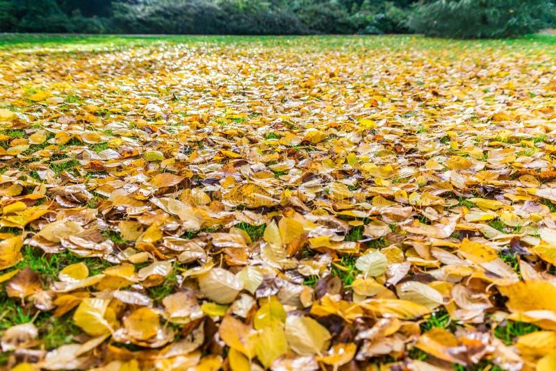 Höstnedgångsidor på gräs fotografering för bildbyråer