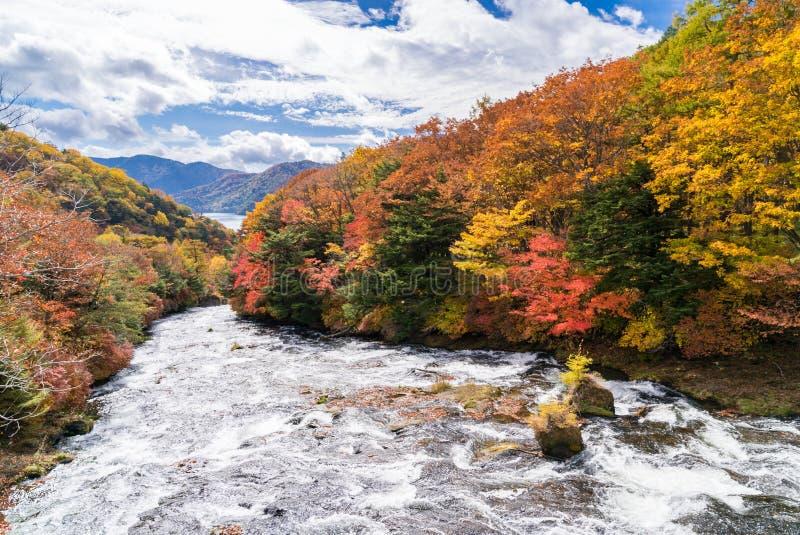 Höstnedgångskog Nikko Japan royaltyfri bild