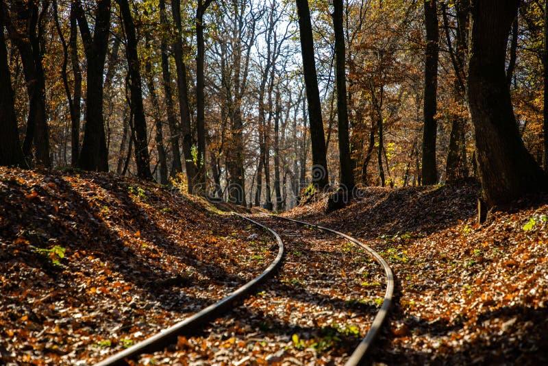 Höstplats med ett drevspår och en skog i bakgrunden fotografering för bildbyråer