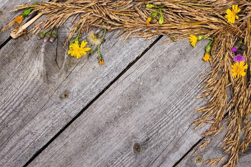 Höstram av torkat gräs och blommor arkivbilder