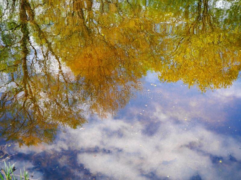 Höstreflexion av de gröna och gula träden och den blåa himlen i sjövattnet arkivbild