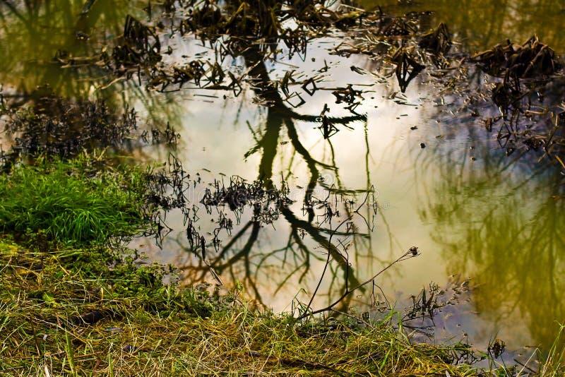 höstreflexionstree fotografering för bildbyråer