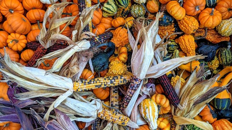 Höstsäsong och dess färgrika frukter och grönsaker royaltyfria foton