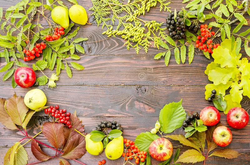 Höstsammansättning av ljusa saftiga sidor, päron, rönnbär, thujafilialer, äpplen på en brun mörk träbakgrund royaltyfria foton
