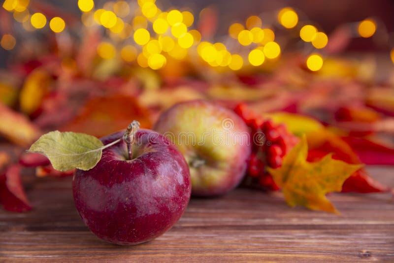 Höstsammansättning med röda ashberry och färgrika sidor för äpplen, med gula varma små ljus på bakgrunden Ordning av royaltyfri bild