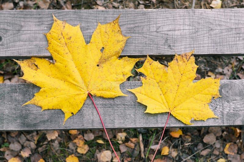 Höstsidor ligger på en träbänk Torka gula l?nnl?v Natur ändring av säsongen Lekmanna- l?genhet, b?sta sikt royaltyfria bilder