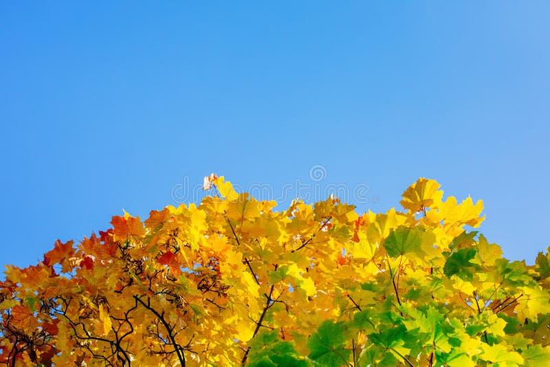 Höstsidor med den blåa himlen royaltyfri fotografi