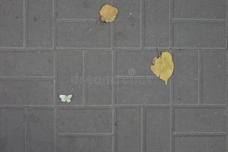 Höstsidor och en fjäril på trottoartegelplattan arkivfoto