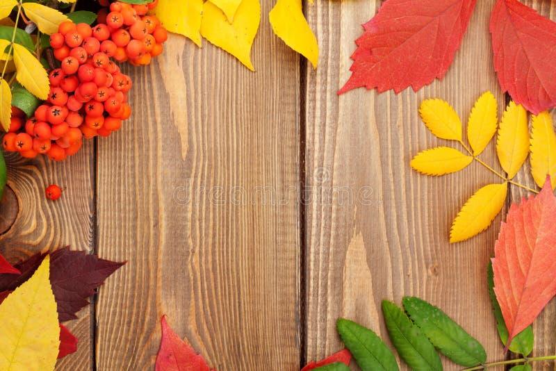 Höstsidor och rönnbär över wood bakgrund fotografering för bildbyråer