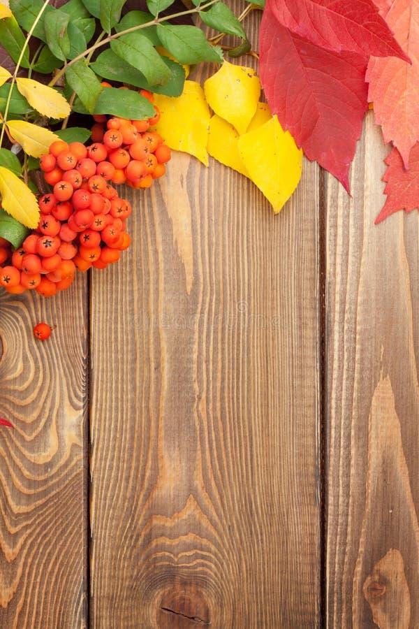 Höstsidor och rönnbär över wood bakgrund royaltyfri bild