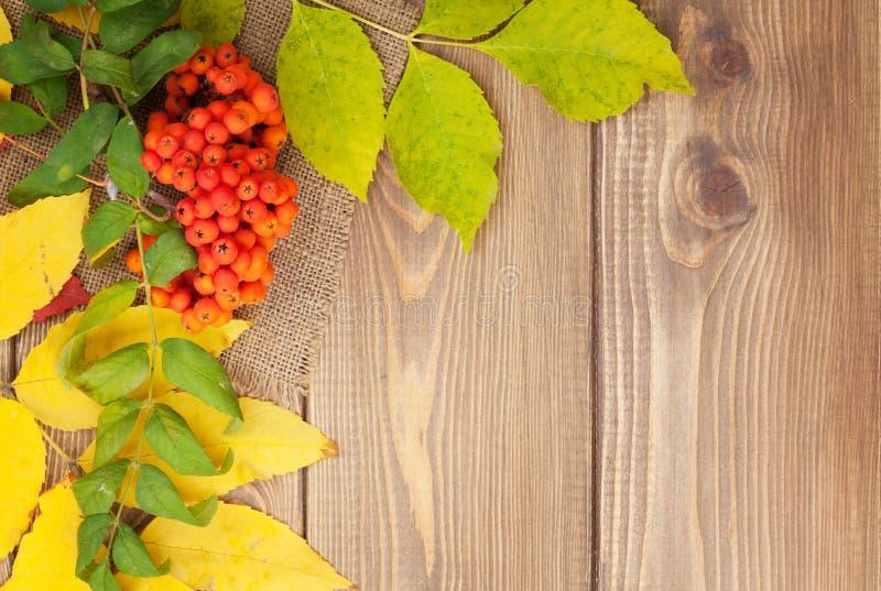 Höstsidor och rönnbär över wood bakgrund arkivbilder