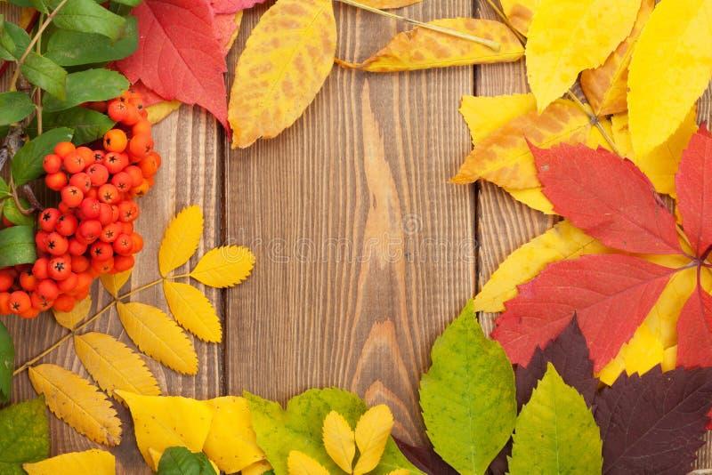 Höstsidor och rönnbär över wood bakgrund arkivbild