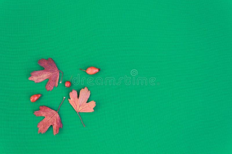 Höstsidor på en grön bakgrund Gamla härliga sidor av träd textur arkivfoto