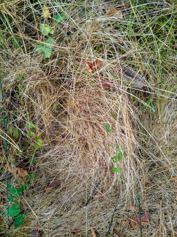 Höstsidor på fältet för grönt gräs, sikt från över textur royaltyfri bild