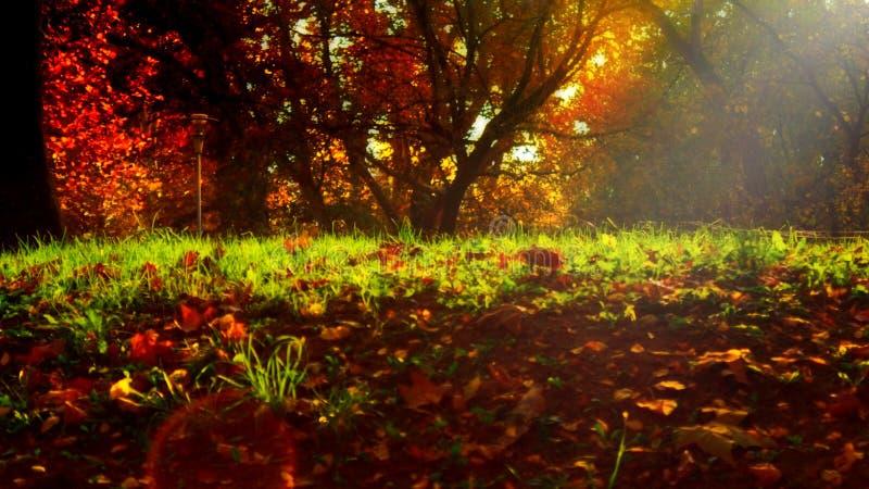 Höstsidor på grönt gräs i solljuset som erbjuder drömlik magisk atmosfär royaltyfria foton