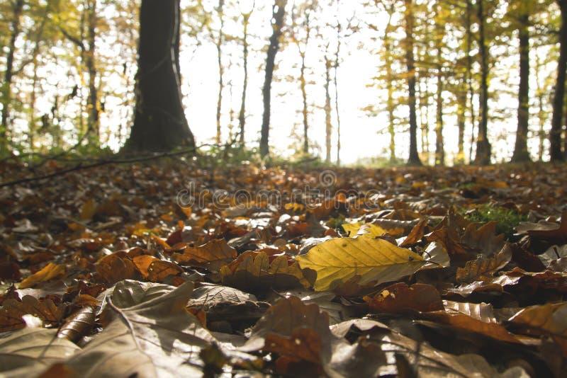 Höstsidor på skogen arkivfoton