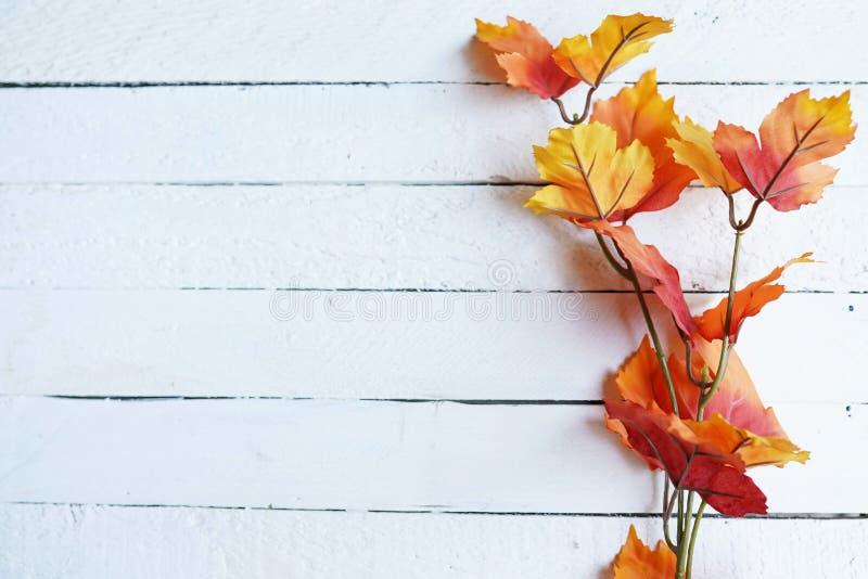 Höstsidor på vit träbakgrund, lägger framlänges, den bästa sikten, kopieringsutrymme royaltyfri fotografi