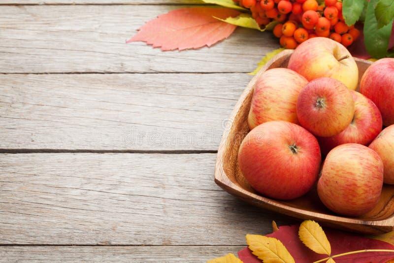 Höstsidor, rönnbär och äpplen över wood bakgrund royaltyfri foto