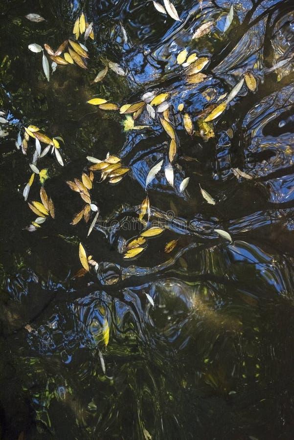 Höstsidor som svävar på mörkt vatten med reflexioner, abstrakt naturbakgrund med kopieringsutrymme som är vertikalt arkivfoton