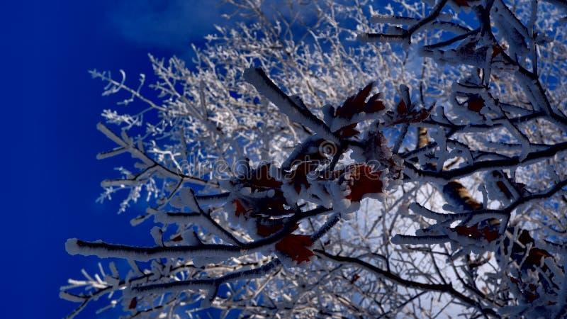 Höstsidor under snön royaltyfri fotografi