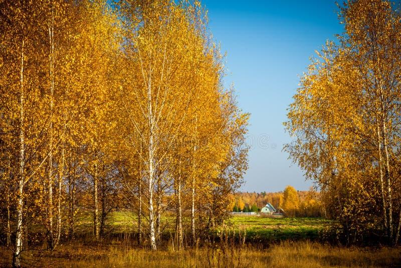 Höstsikt av det ensamma huset i fältet till och med träden arkivfoto