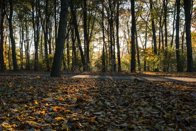 Höstsikt av en skog på solnedgången fotografering för bildbyråer