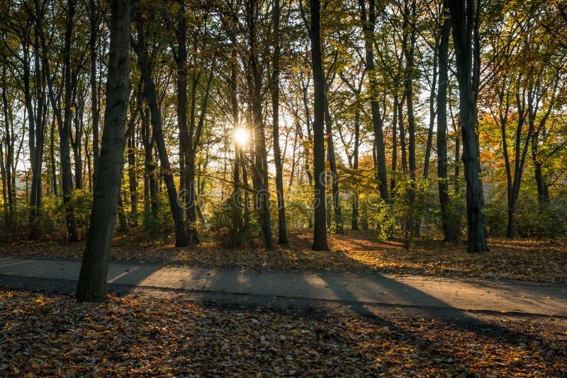 Höstsikt av en skog på solnedgången royaltyfri bild