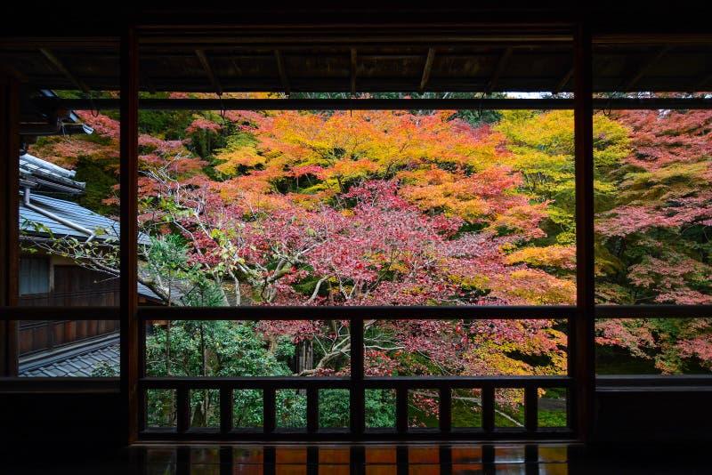 Höstsikt av lönnträd i vibrerande nedgångfärg som inramas av en japansk wood balkong royaltyfria foton