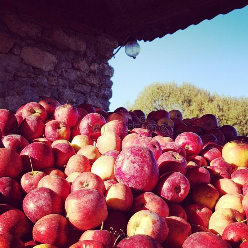 Höstskörd av äpplet på ukrainsk lantgård arkivfoto